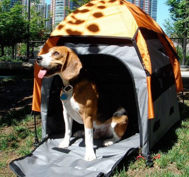 Pets of Norway og UPet Pop-up telt Beagle