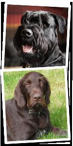 0211ed04 Etableringen av Pets of Norway AS er et resultat av to familiers  lidenskapelige interesse for kjæledyr, og for at kun de beste produktene er  gode nok for ...